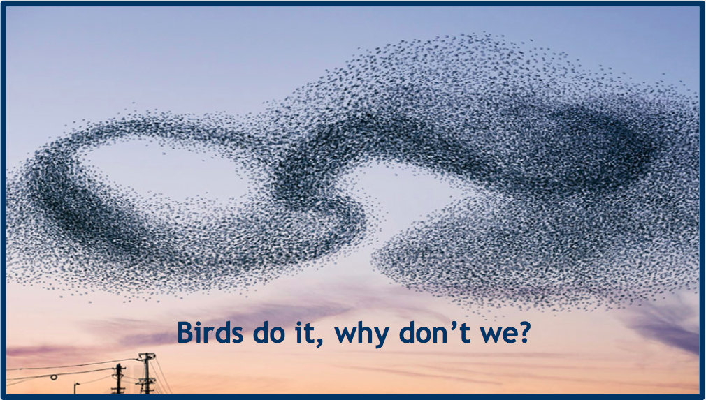 If Birds can do it, why can't we